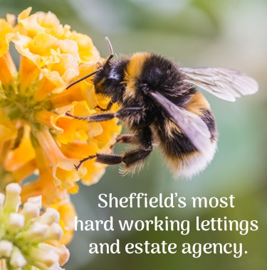 Sheffield's most hard working lettings and estate agency